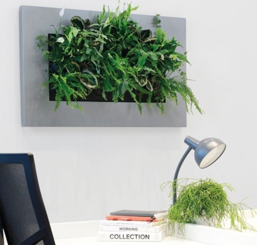 real plant pictures in frame