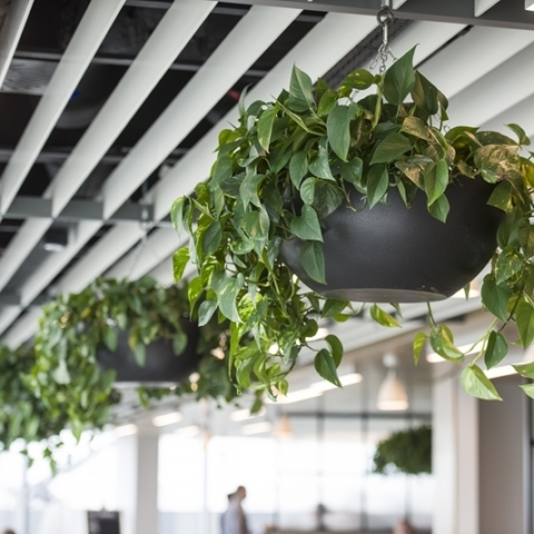 hanging plants for the office