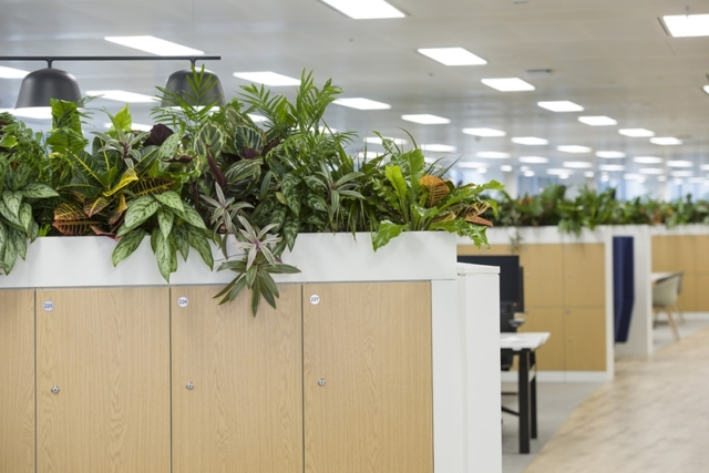 office cupboards with plant tops