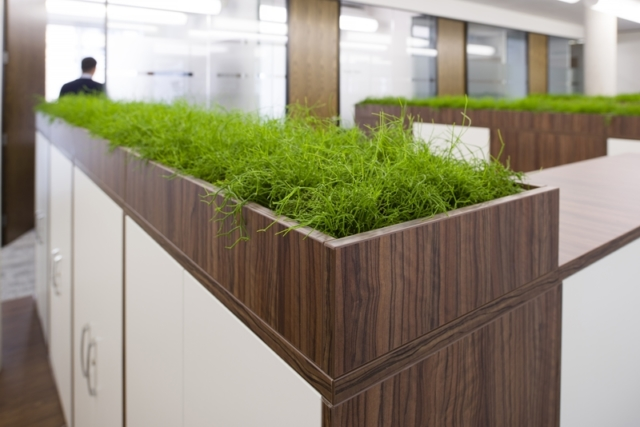 office cabinets with plant tops