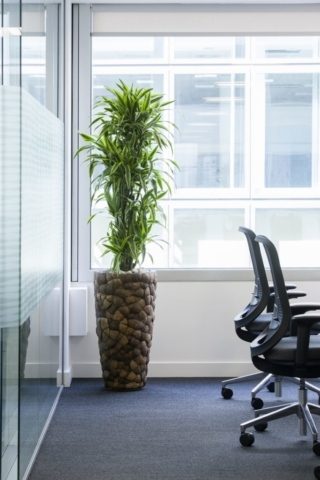 office planting containers