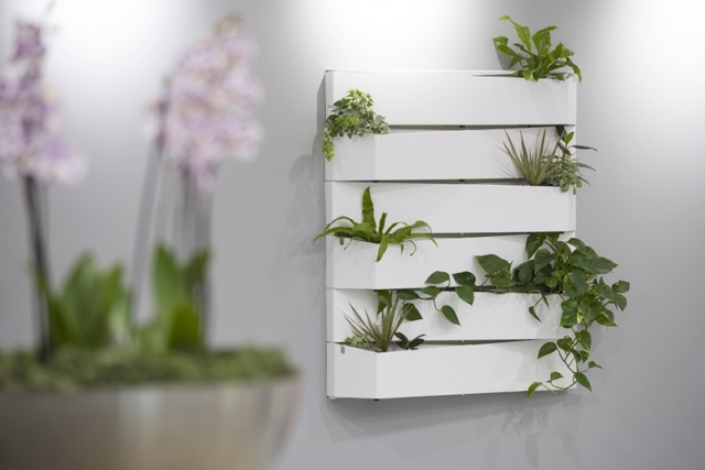 Wall plant displays for offices