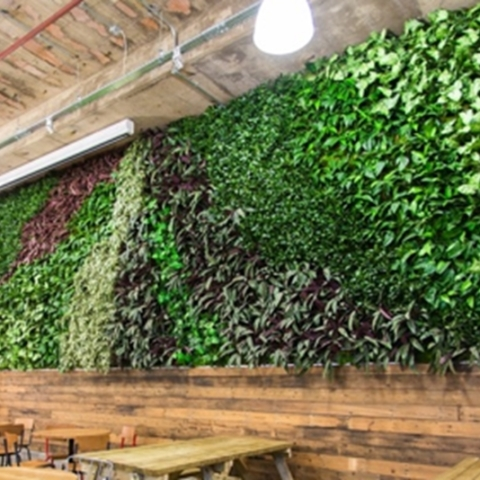 office planting walls