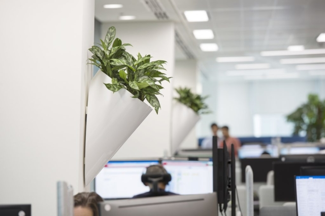 office plants supplier